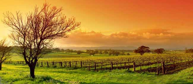 Hunter Valley Australia  city photos : Hunter Valley Tour from $294.00 per person