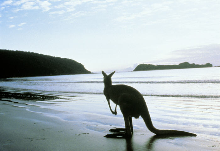 Top 5 Best Holiday Islands in Australia, Seekyt